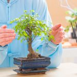 Feng šuej – Bývanie, ktoré pomáha – 4. časť