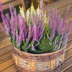 Chlad zavíta až ku dverám, ochráňme rastliny v ich blízkosti