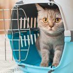 mačku do prenosky