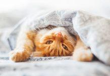 Výchova mačky