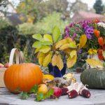 Farebný koktail jesenných dní