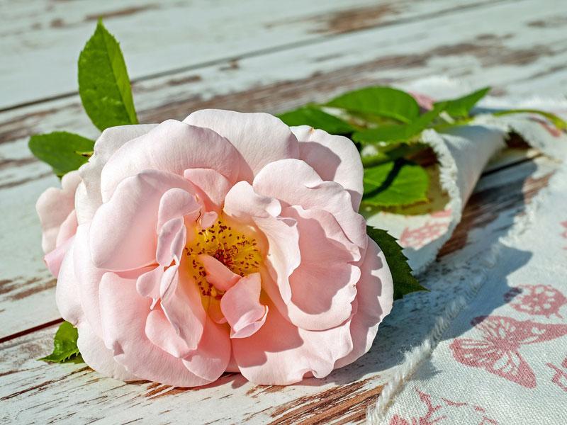 ruza, kvety