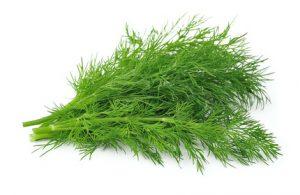 rady o koreninách a bylinkách