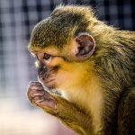Urobte si krásny deň a navštívte zvieratká v ZOO Kontakt!