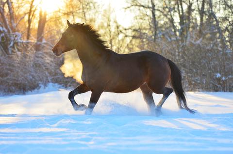 kôň na snehu