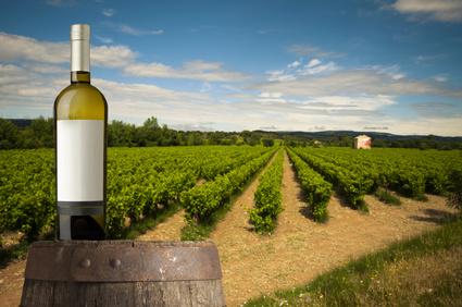 Wine, barrel and vine on background of vineyard