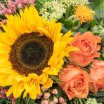 Čas, keď kvitnú slnečnice…