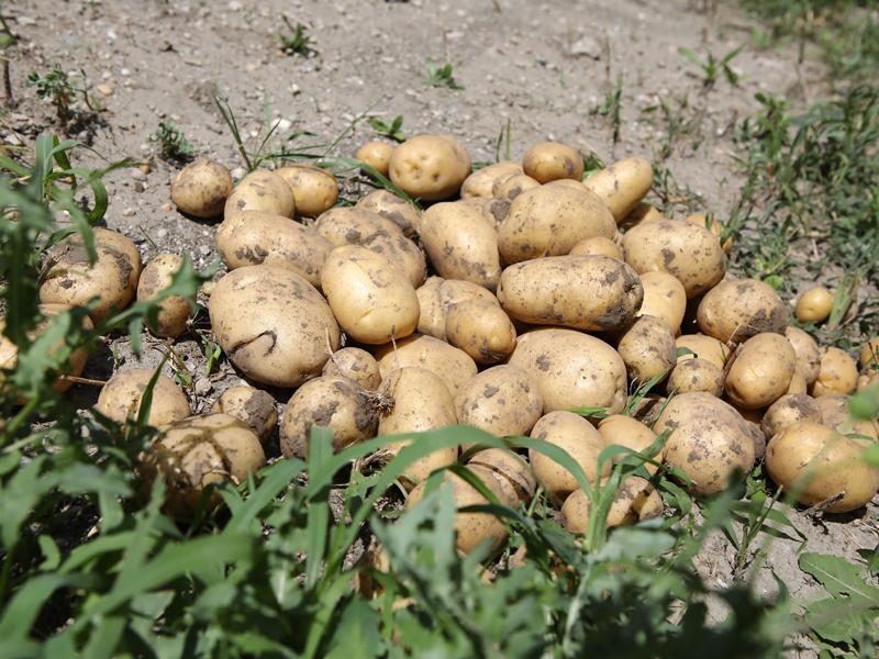 Slovenské zemiaky