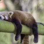 Trápi vás vysoký krvný tlak? Spánok môže pomôcť!