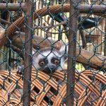 Deň plný zábavy vbratislavskej Zoo vyvrcholil krstom lemura