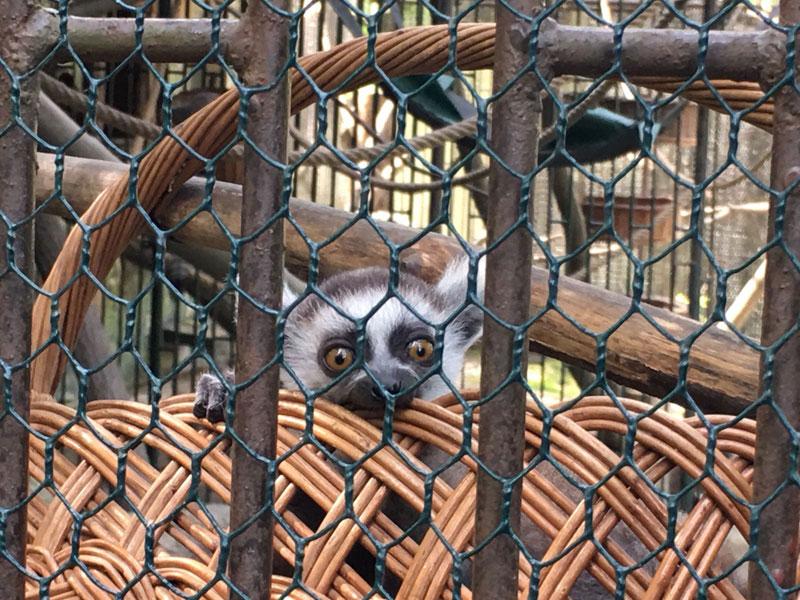 vbratislavskej Zoo