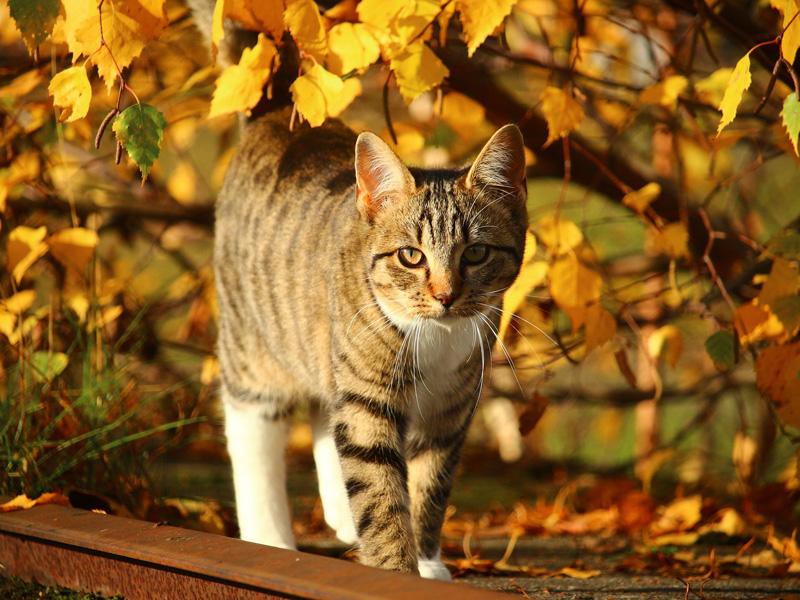 zavonia jeseň