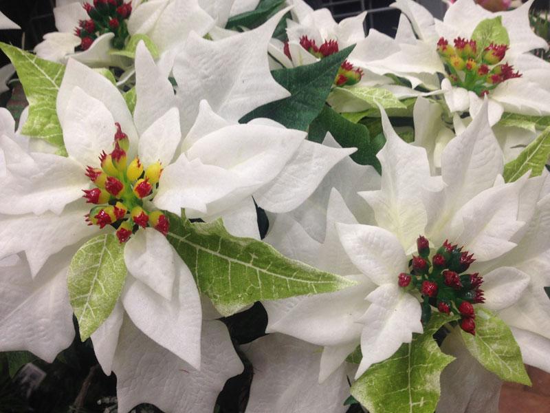 Vianočné ruže