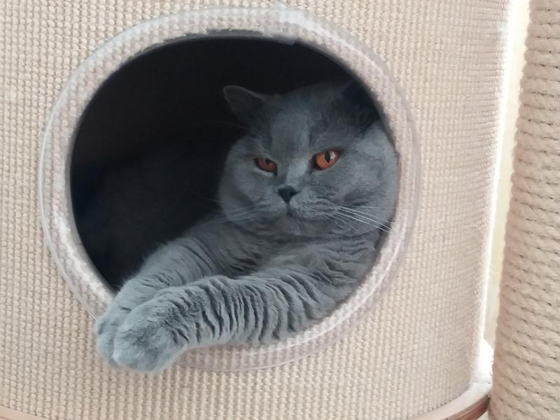 príťažlivé nahá tesný mačička