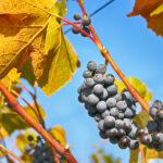 Ako hrá víno farbami?