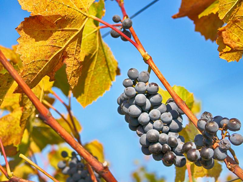 Ako hrá víno farbami