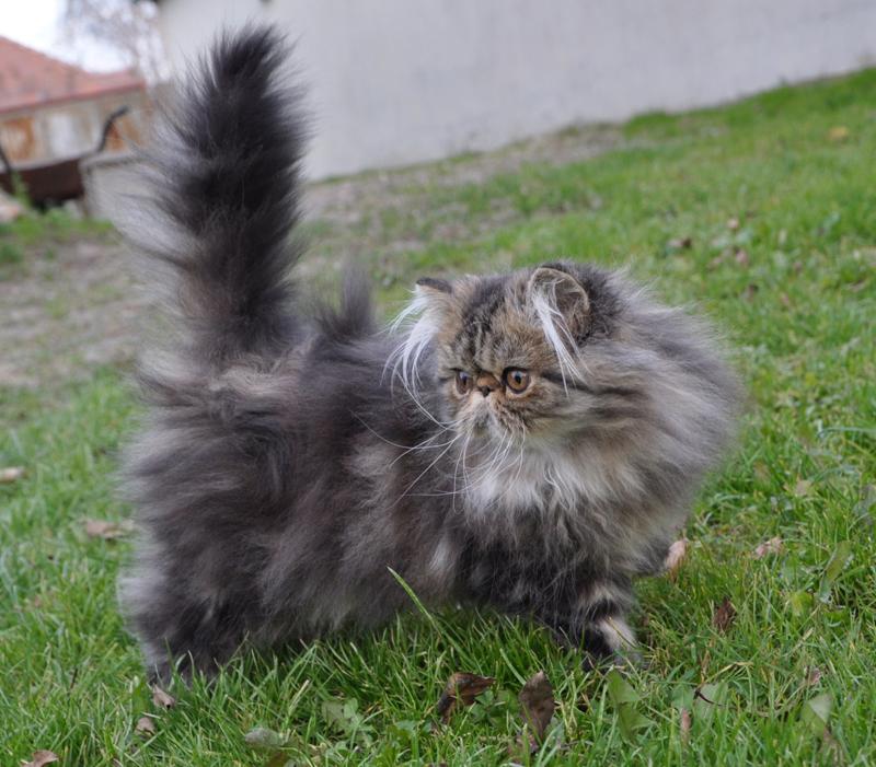 Mama oholený mačička