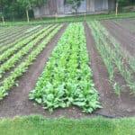 Je rozmiestnenie semien pri sejbe dôležité?