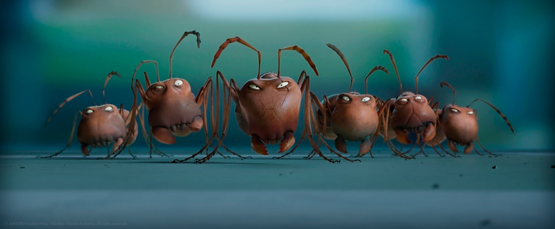 čierny mravec sex