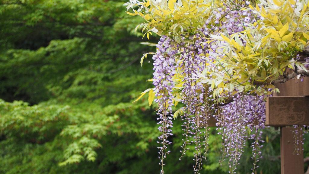 Voňavé kvety