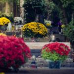 Ktoré kvety vydržia