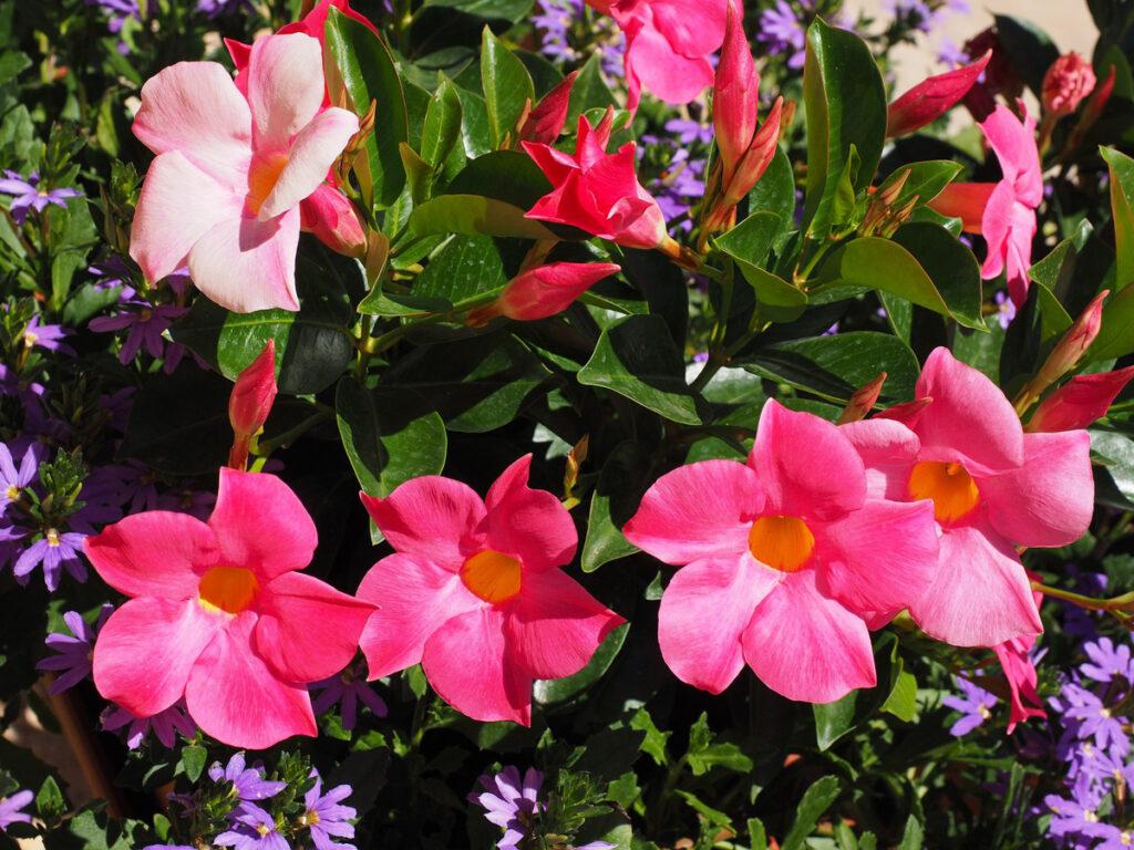 ako prezimovať citlivé rastliny