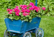 bohato kvitnúce kvety