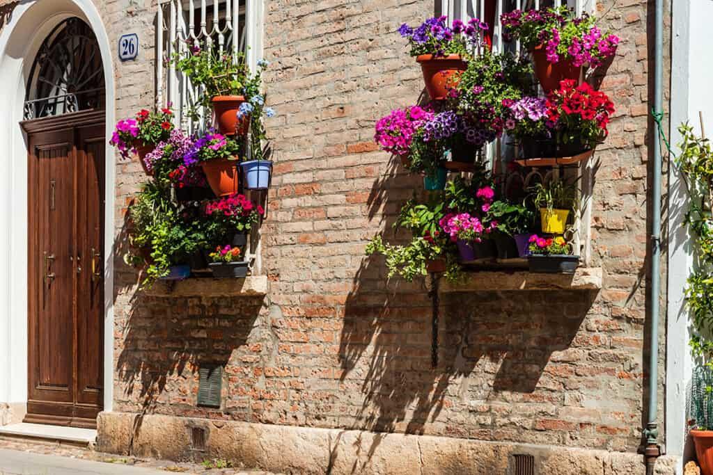 kvitnúce rastliny